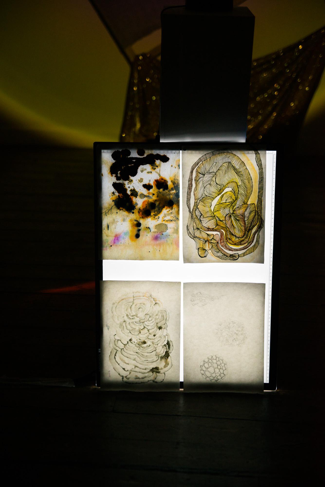 Ebor Exhibition: Natalie Sharp