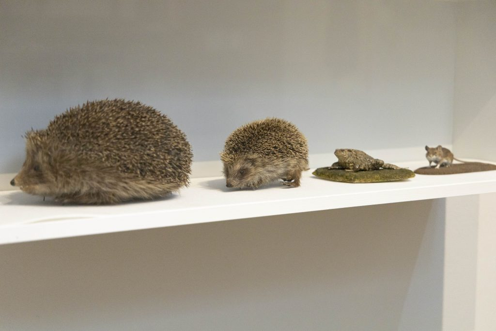 What's Changed? 53. Selection of taxidermy, date unknown